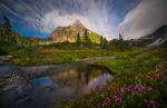 olympic national park olympic  national park wildflowers flowers reflection peak christie