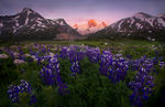 Boundary Range, Glacial, Peak, Alaska, British Columbia, wildflowers, sunset