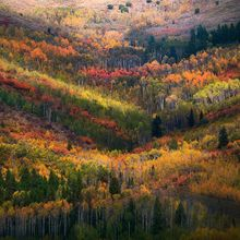 Fall, Aspen, Idaho