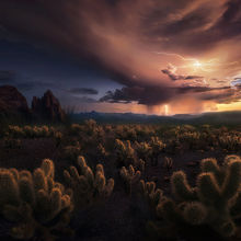 Cholla, Lighting, Arizona
