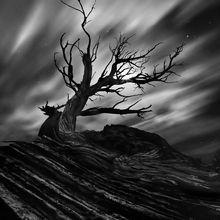 moonlight, juniper, gnarled, dead, sandstone