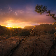 Zion, Tree, Lonely, Sunset, Sandstone