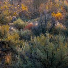 Great Basin, Sagebrush, Colorful, Autumn, Steens