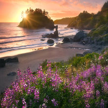 lupine, flowers, sunset, sea stacks, beaches, california, coast
