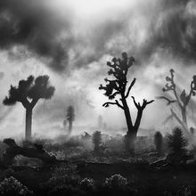 Joshua Tree, California, Death Valley, Unique, Dramatic