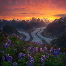 Alaska, wilderness, summer, flowers, remote, unique, glacier, coast mountains