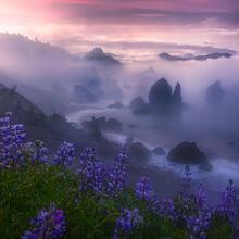 Dawn at the coast