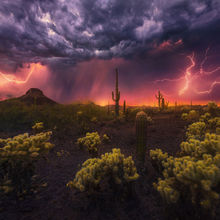 Cactus, desert, lightning, sonoran, phoenix, thunderstorm, monsoon