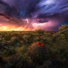 cactus, arizona, storm, lightning, Lemmon