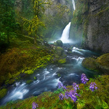 Wahclella Falls, Oregon, Columbia Gorge, Flowers