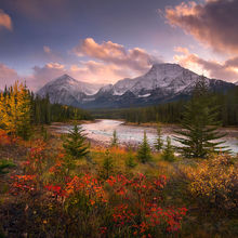 Vibrant, Fall, Wild Rose, Aspen, Jasper, Athabasca, River, Sunset, Canadian Rockies
