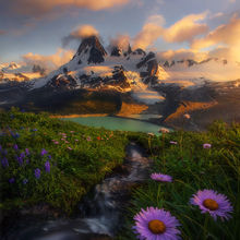Wildflowers, summer, mountains, glacier, bc, alaska, cascades