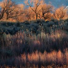 california, owens valley, foliage