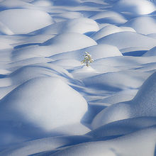 Lone tree, tree, winter, struggle, emerge, canada, jasper, snow