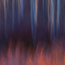 Utah, Boulder Mountain, Willows, Aspen, Abstract, motion