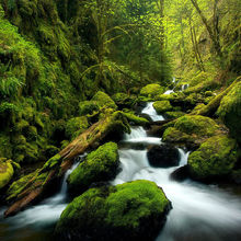 cascades, beautiful, canyon, mossy