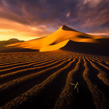 Spring, Sand Dunes, Dunes, Death Valley, California