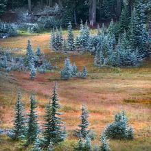 Fall, Scenic, wilderness, snow, oregon, cascade, pine, colorful, autumn, meadows