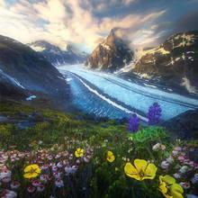 Glacier Garden