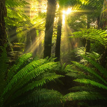 New Zealand, coast, forest, beams, light, rays, warm