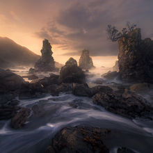 coast, New Zealand, rainforest