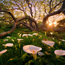 California, Calla Lily, Marc Adamus, Flowers, Forest, Sunset