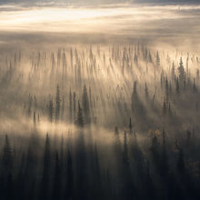 Yukon, boreal, beams, sunbeam, fog beam, fog