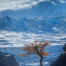 Lengus, tree, ice, icecap, glacier, frozen, patagonia, lago grey, chile