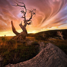 lenticular, blackfoot, montana, old, tree
