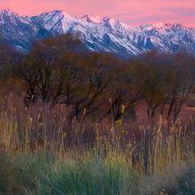 colorful, fields, grasses, sage, willow, cottonwood, eastern sierra, sierra, owens valley, sunrise