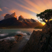Coigue, Torres Del Paine, Chile, Andes