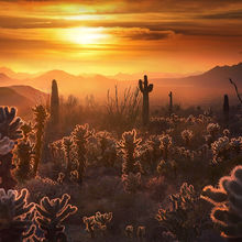 Cholla, Cactus, arizona, desert, sunset