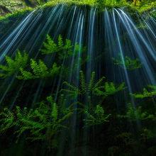 maiden fern, fern, spring, luminous, moss, cascade, oregon, columbia gorge