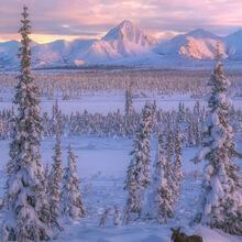 Moose Meadows