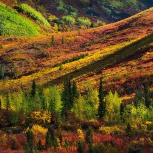 yukon, canada, autumn, dempster