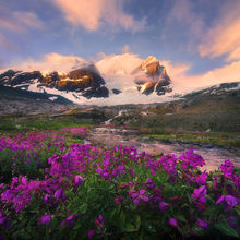 Sunrise, colors, glaciated, peaks, vibrant, wildflowers, pacific range, british columbia