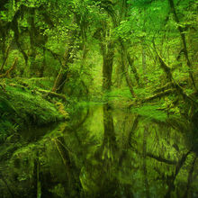 Rain Forest, Olympic, Washington, Trees, Old Growth, Woods, Reflection, Green, Spring, Washington