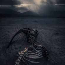 death, skeleton, dying, ominous, cracked, desert, skull, southwest