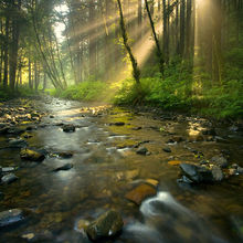 Rock Creek wilderness, wilderness, sun burst, trees, forest, creek, morning