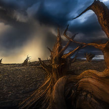Reaching to the Storm