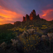 Cactus, Desert, Wildflowers, Spring, Arizona, Superstition, Mountains