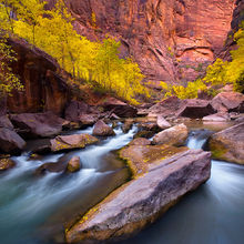 Zion, Virgin River, colorful, autumn, cottonwoods, sandstone, canyon