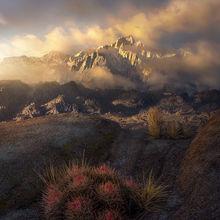 Sierra, Cactus, Snow, Clearing, Storm, Sunrise, Alabama, Mist, Fog, Movie Road