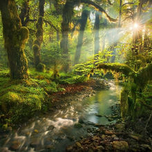 Magical, Olympic, Rainforest, lush, paradise, beauty, wilderness, remote