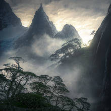 coigue, rainforest, Patagonia, fiords, Chile, peak, misty