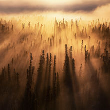 Yukon, forest, beams, light beam, godbeam