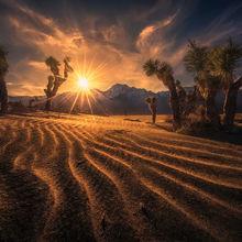 Mojave, Joshua, sand dunes