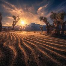 global warming, desertification, desert, sand dunes, dunes, California, Joshua tree