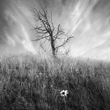 lonely, flower, oregon, alive