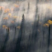 Boreal forest, autumn, fog, peaceful